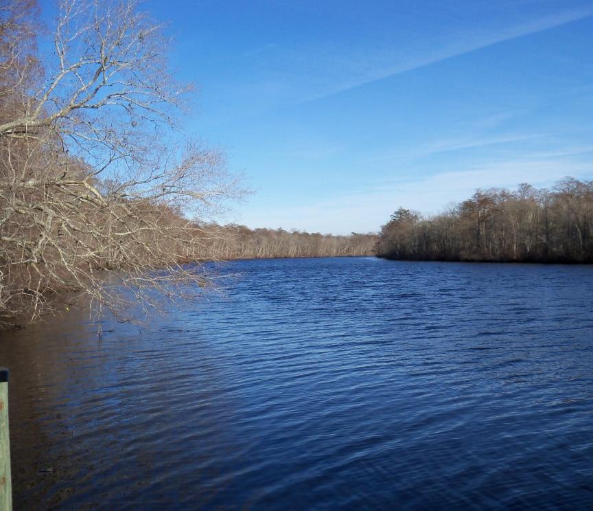 Pocomoke-River-State-Park-01.png