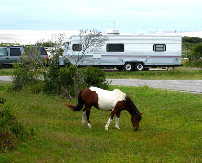 assateague-island-camping-01.png