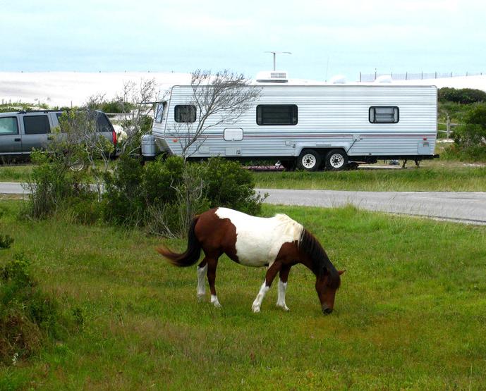 assateague-island-camping-01.png