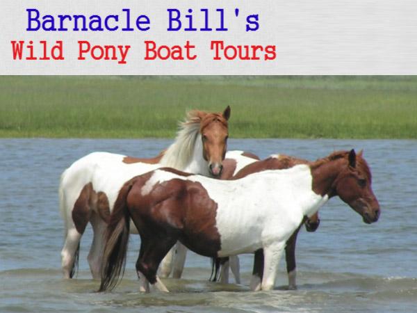 Assateague Island Boat Tours Ocean City Maryland