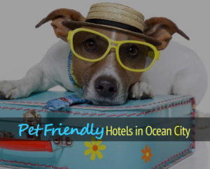 Hotels Ocean City Md Pets Allowed